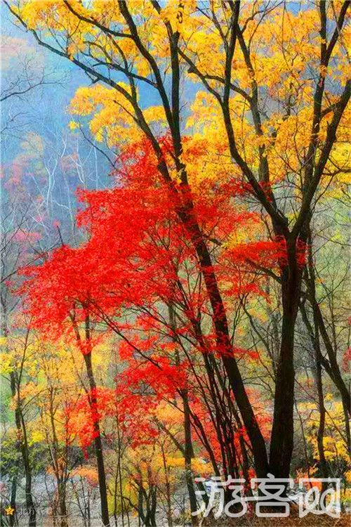 新宾岗山国家森林公园
